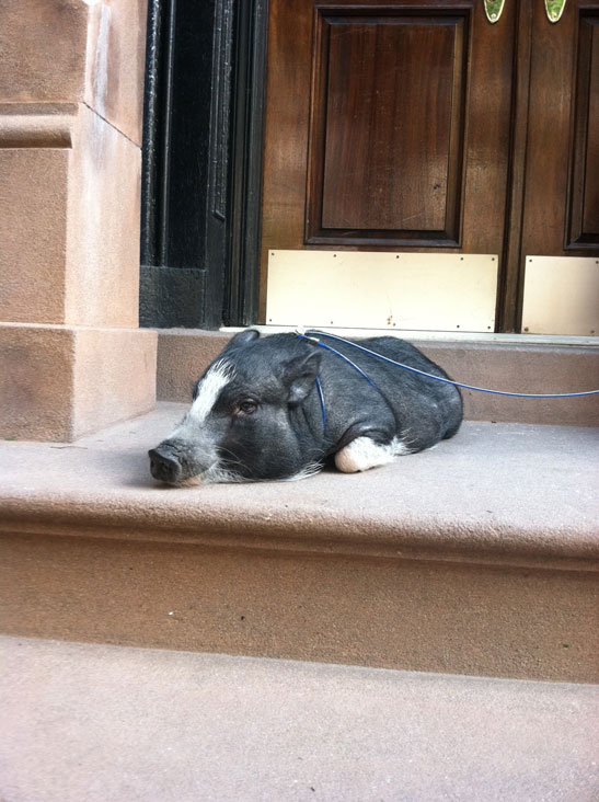 """Stoop sitter"" photo by Kim Parker"